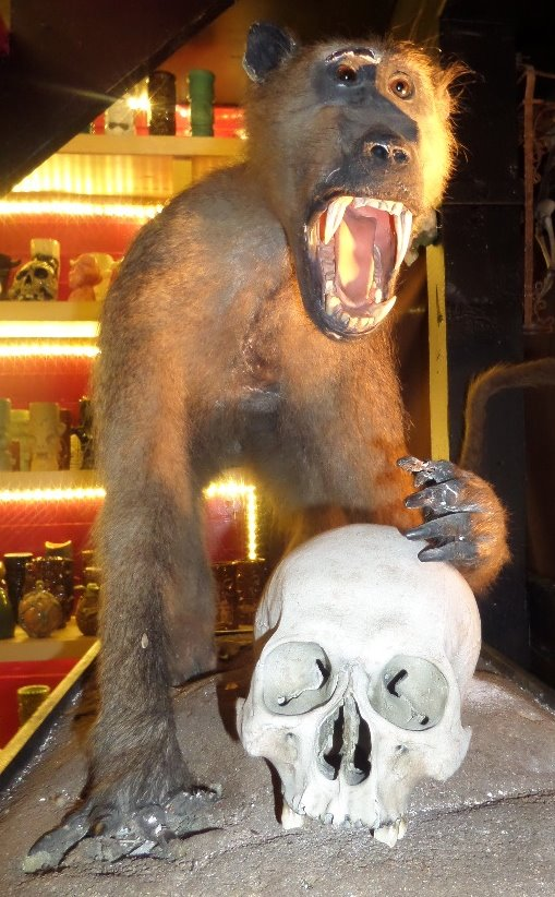 A monkey and a skull at Monkey Skull Voodoo Lounge